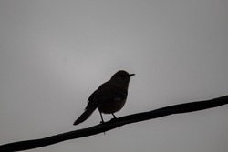silhouette of a bird sitting on a power line with a gray sky background.