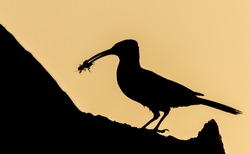 Silhouette of a bird standing on a tree trunk with an insect in its beak, with a background of yellow tones.