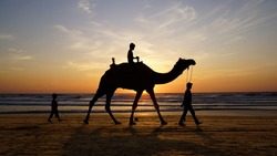 Silhouette of a camel on the sea at sunset.