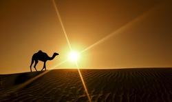 Silhouette of a camel walking alone in the Dubai desert