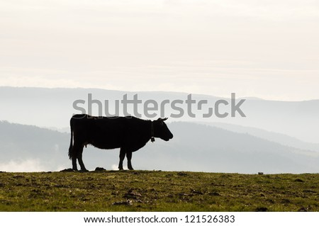silhouette of a cow in the field at dawn with fog covered valley in the background