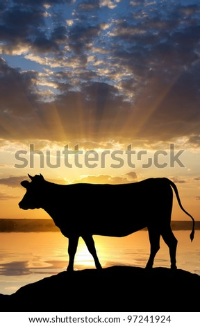 Silhouette of a cow situated on the bank of the river on a decline