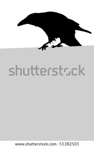 Silhouette of a crow