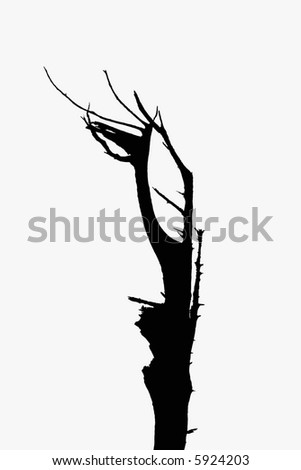 silhouette of a dead tree in black and white