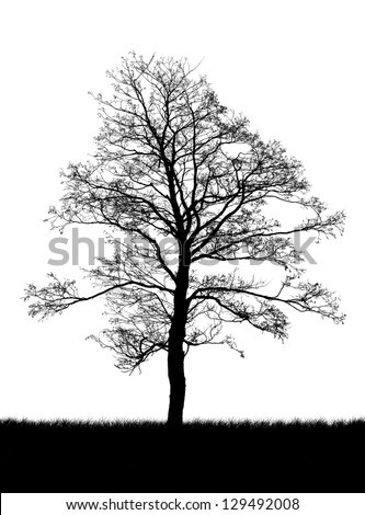 silhouette of a dead tree isolated on white