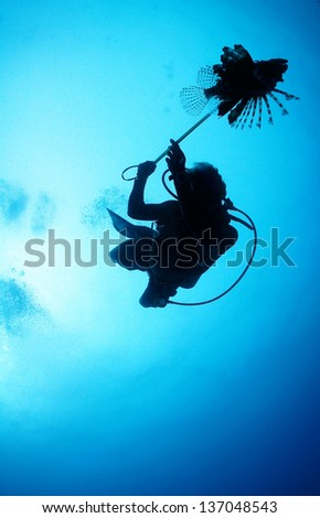Silhouette of a dive guide spearing a lion fish - Riviera Maya, Mexico