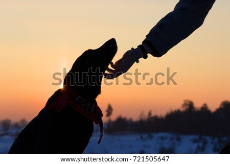 Shutterstock silhouette of a dog and man hand. abopt a dog concept