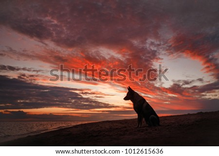 Silhouette of a dog at sunset. Pet on the nature #1012615636