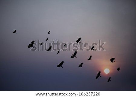 Silhouette of a flock of blackbird flying through a surreal evening sky with a fiery sun.