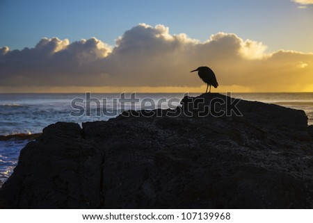 Silhouette of a heron resting on rock at sunrise