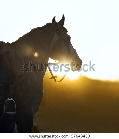 Silhouette of a horse in sunset beams