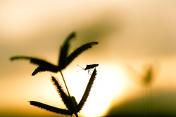 Silhouette of a insect at sunset