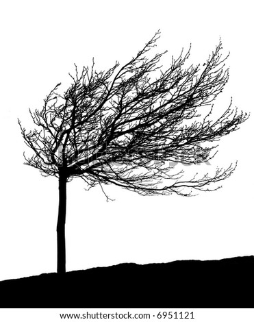 Silhouette of a leafless wind-molded tree during winter.