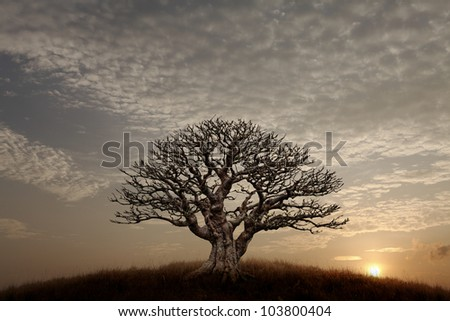 Silhouette of a lone barren tree on a hilltop against a surreal sunset sky.