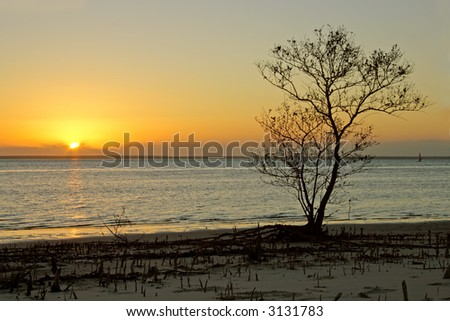 Silhouette of a mangrove tree against a sunset over coastal water, Mozambique, southern Africa
