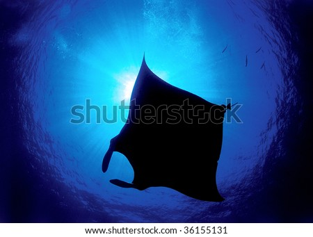 Silhouette of a manta