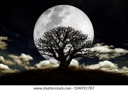 Silhouette of a old spooky tree against a large moon at twilight.