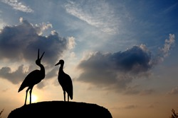 Silhouette of a pair of stork mating in their nest against a magical surreal sunset.