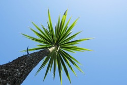 Silhouette of a palm tree against clear blue sky. Summer hot holiday vacation concept