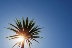 Silhouette of a palm tree against clear blue sky. Summer hot holiday vacation concept. Sun flare, copy space