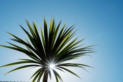 Silhouette of a palm tree against clear blue sky. Summer hot holiday vacation concept. Sun flare