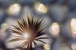 Silhouette of a palm tree against clear blue sky. Summer hot holiday vacation concept. Sun flare. Exotic holiday theme