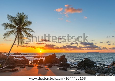 Silhouette of a palm tree and a sand beach inside Corcovado National Park with a view over the Pacific Ocean at sunset, Osa Peninsula, Costa Rica, Central America. #1044485158