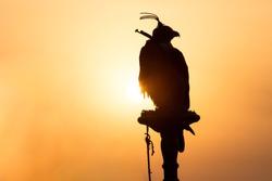 Silhouette of a saker falcon in front of a sunrise in the desert. Dubai, UAE.