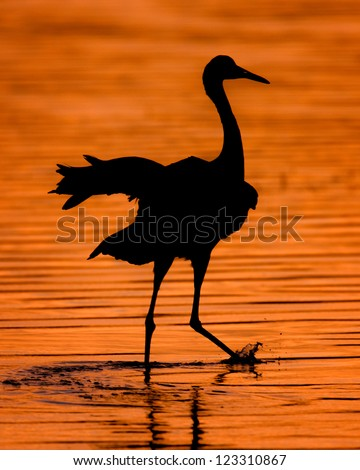 Silhouette of a sandhill crane at sunset in Bosque del Apache National Wildlife Refuge near San Antonio, New Mexico on December 13, 2012