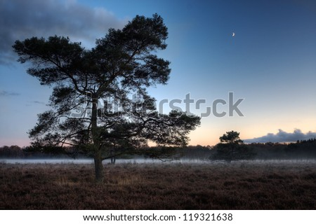 Silhouette of a Scots Pine (Pinus sylvestris) on a misty moor at nightfall, moon in the sky