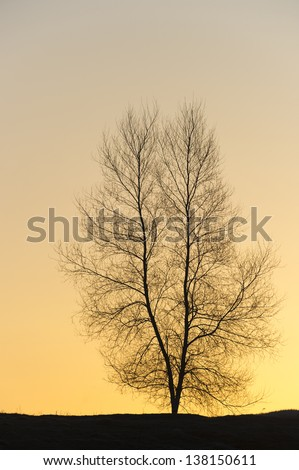 Silhouette of a single barren tree at sunset.