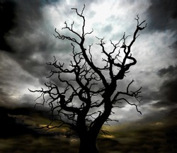 silhouette of  a skeleton dead tree with a very moody, stormy sky beyond