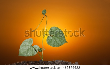 Silhouette of a sprout of a flower