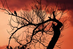Silhouette of a tree and a bird at sunset