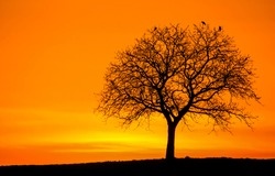 Silhouette of a tree at sunset. Lonely tree silhouette at sunset background. Sunset tree landscape. Tree at sunset