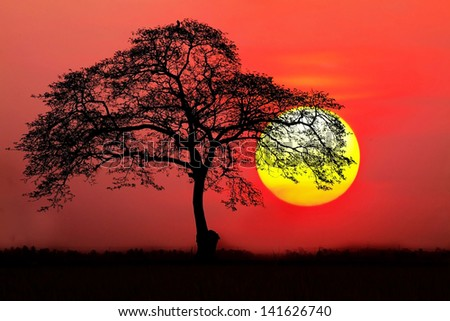 silhouette of a tree in the