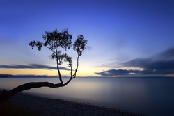 silhouette of a tree on a long exposure on the shores of Lake Baikal