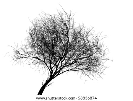 silhouette of a tree on a white