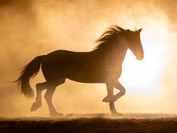 Silhouette of a trotting Frisian horse with waving manes in a orange smokey atmosphere, against the light with smoke and a bright lamp