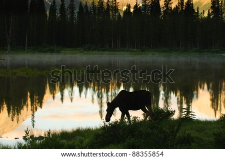 Silhouette of a Wild Moose feeding by a lakeshore at sunrise Kananaskis Country Alberta Canada