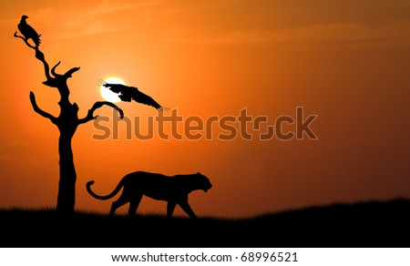 silhouette of african leopard against orange dusk dawn sun with flying vulture
