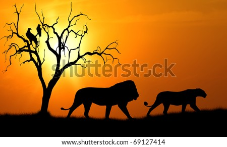 silhouette of african male and female lion against orange dusk dawn sun with tree and vultures
