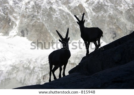 Silhouette of an ibex