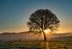 Silhouette of an oak tree at sunrise with sun rays streaming through tree, near Jefferson, Oregon