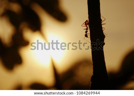silhouette of ants working That demonstrates a strong work ethic and good teamwork. #1084269944