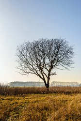 Silhouette of bare tree with erratic shaped branches in the foreground in a rural area in a Dutch polder. It is in the end of the winter season.
