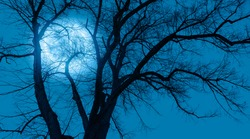 Silhouette of barren lone tree with Blue full moon