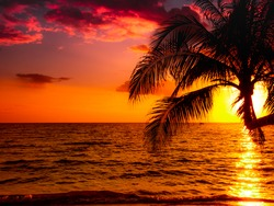 Silhouette of beautiful sunset on the sea beach with palm tree for travel in holiday relax time as summer