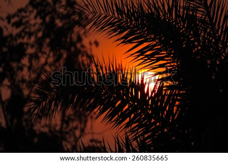 Silhouette of beautiful tree in the sun in the morning