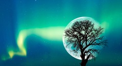 Silhouette of birds and lone tree with Northern lights (Aurora Borealis) on the background full moon